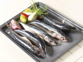 Fresh mackerels — Stock Photo
