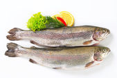 Two fresh trout — Stock Photo
