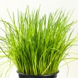Fresh chives — Stock Photo #41426161