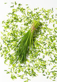 Fresh chives — Stock Photo