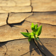 Plant growing through dry cracked soil — Stock Photo #51198975