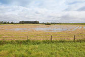 Flooded hay field — Stock Photo