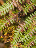 Sun flies on bracken — Stock Photo