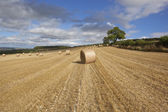 Round bales at harvest time — Stock Photo