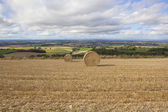 Harvest scenery — Stock Photo