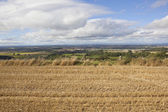 Yorkshire wolds scenery — Stock Photo