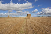 Hay stack at harvest time — Stock Photo