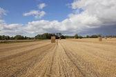 方形稻草堆 — 图库照片