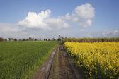 Classic Punjabi landscape — Stock Photo