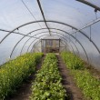 Poly tunnel in springtime — Stock Photo