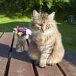 Stock Photo: Cat with flowers