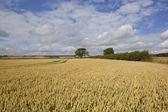 Landwirtschaftliche landschaft — Stockfoto
