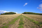 Hillside stubble field — Stock Photo