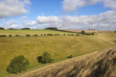 Yorkshire wolds pastures — Stock Photo