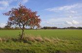 Autumn whitebeam tree — Stock Photo