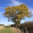 Autumn ash tree — Stock Photo