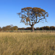 Autumn oak tree — Stock Photo