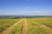 Freshly cut hay field — Stock Photo