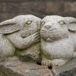Two rabbits — Stock Photo #26093523
