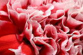 Pink peony flower petals — Stock Photo