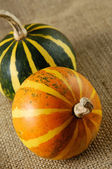 Two Gourds Still Life — Stock Photo