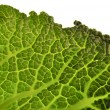 Savoy cabbage background — Stock Photo