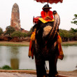 Elephants in ayutthaya - Stock Photo