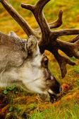 Svalbard — Stock Photo