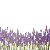 Lavender Background — Stock Vector