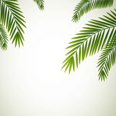 Palm Leaves — Vector de stock