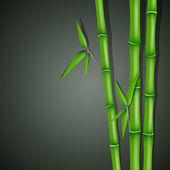 Bamboo — Stock Vector