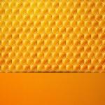 Honeycombs — Stock Vector #42004887
