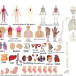 Vector set of an internal of the person - Stockfoto