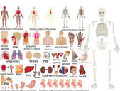 Vector set of an internal of the person — 图库照片