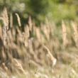 Gray old dead grass nature background - Stock Photo