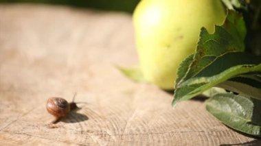 Ślimak w pobliżu jabłko — Wideo stockowe #12584407