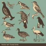 Forest bird vectors — Stock Vector #4438095