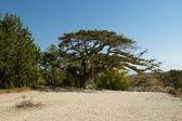 罗兹岛希腊的典型景观 — 图库照片