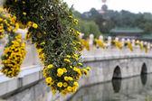 Parque beihai--es un jardín imperial al noroeste de la ciudad prohibida en beijing — Foto de Stock