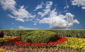 клумба из цветов на фоне голубого неба с облаками — Стоковое фото