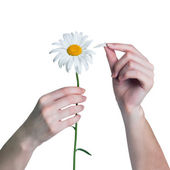 Woman guesses on a chamomile flower. Gir tears off petals of dai — Stock Photo