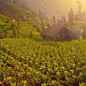 Organic farm with little house. — Stock Photo