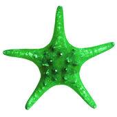 Beautiful starfish isolated on white background — Stock Photo