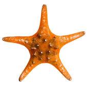 Beautiful starfish — Stock Photo