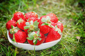 Bowl with strawberries — Foto de Stock