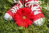 Sneakers and flower — Stock Photo