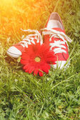 Red sneakers with flower  — Stock Photo
