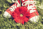 Sneakers with gerbera — Stock Photo