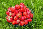 用草莓碗 — 图库照片