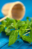 Mint Leaves — Stock Photo